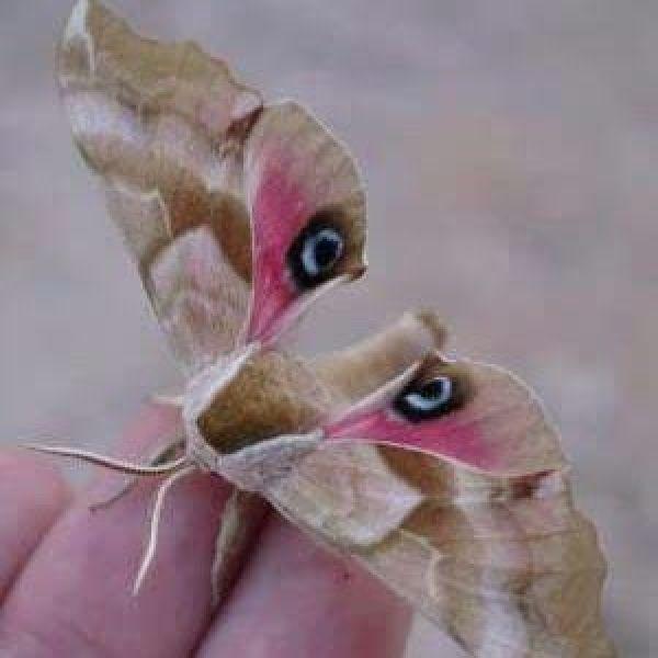 Butterfly ile Görüntülü Görüş